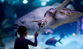 Downtown Aquarium houston-tx 731_1girlseaturtle-1024x682