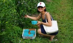 Moorhead's Blueberry Farm houston-tx moreheads-blueberry-farm4-1024x683