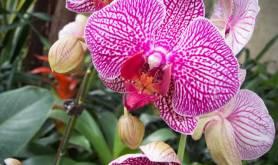 San Antonio Botanical Garden san antonio-tx Gardens-3